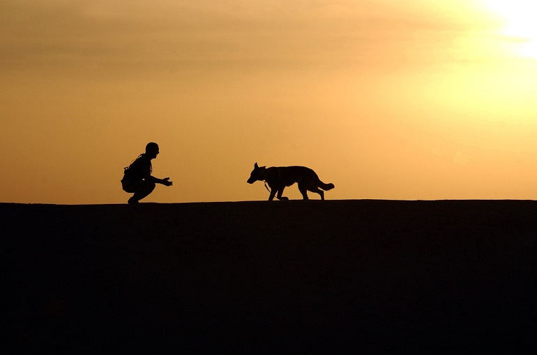 5 Benefits Of Owning A German Shepherd